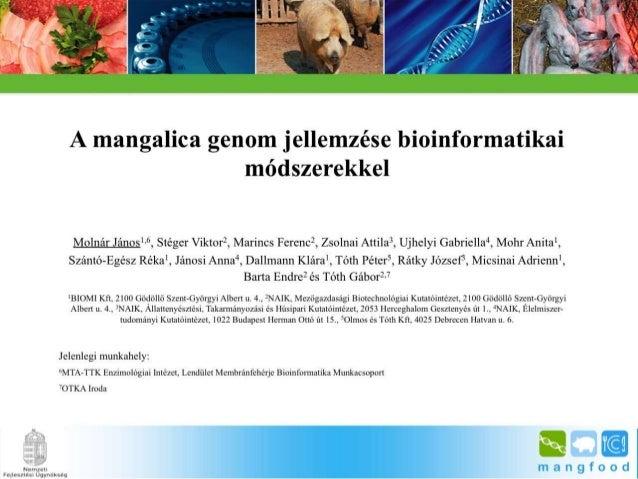 BpSM 2014.03. - Molnár János: A mangalica genom jellemzése bioinformatikai módszerekkel