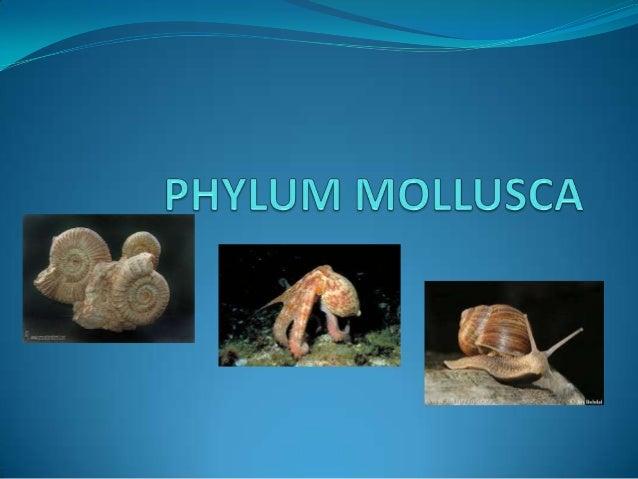  Segundo phylum más numeroso. (50000 especies)  Simetría bilateral  Superficie ventral plana y muscular  Cuerpo blando