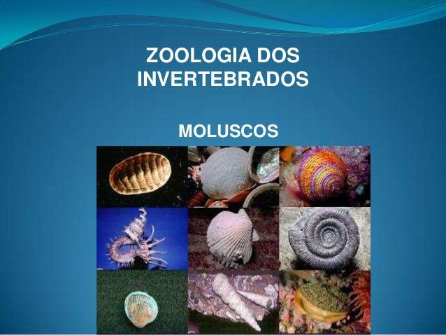 ZOOLOGIA DOSINVERTEBRADOS   MOLUSCOS