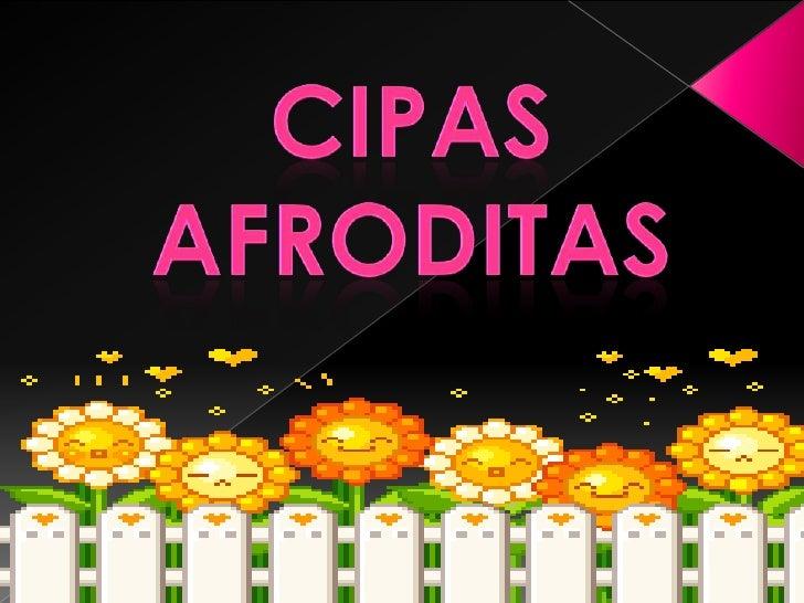 CIPAS <br />AFRODITAS<br />