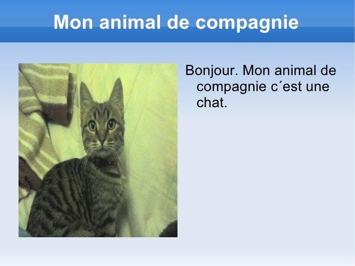 Mon animal de compagnie <ul>Bonjour. Mon animal de compagnie c´est une chat. </ul>