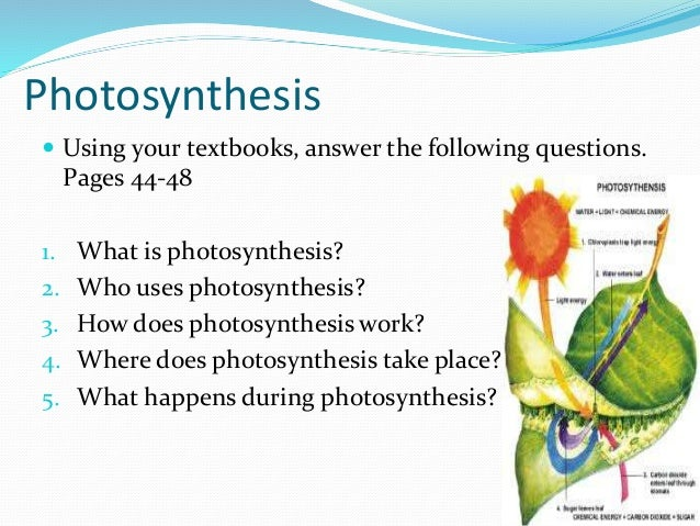 where does photosythesis take