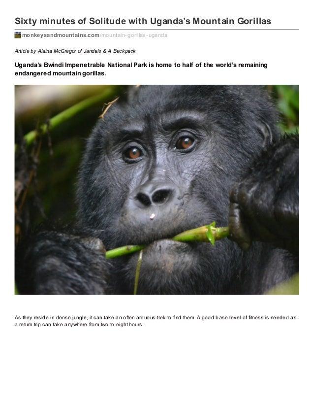 Sixty minutes of Solitude with Uganda's Mountain Gorillas