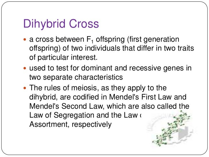 Monohybrid and dihybrid cross