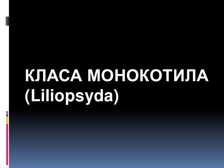 КЛАСА МОНОКОТИЛА(Liliopsyda)