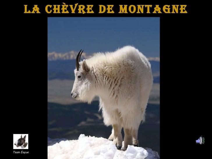 la Chèvre de Montagne Team Eaque