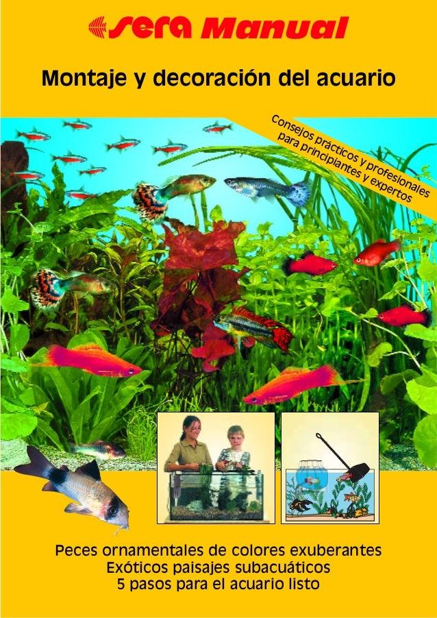 Montaje y decoracion del acuario manual 2 - Decoracion manau sl ...