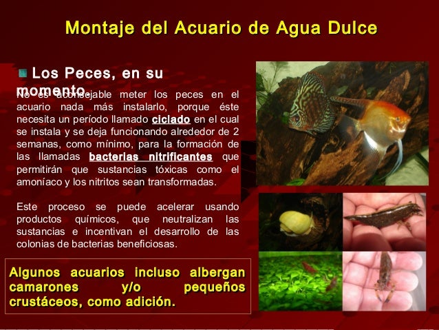 Montaje y decoracion de acuarios de agua dulce for Peces agua dulce calida para acuario