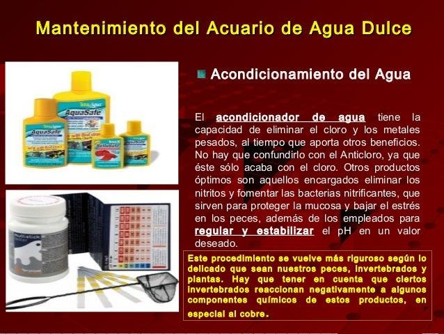 Montaje y decoracion de acuarios de agua dulce for Mantenimiento piscina agua salada