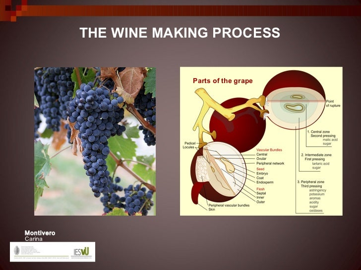 THE WINE MAKING PROCESS                        Parts of the grapeMontiveroCarina