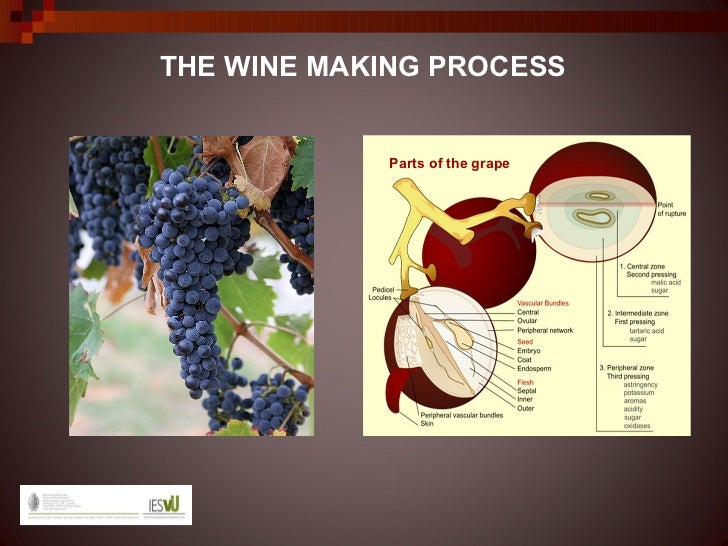 THE WINE MAKING PROCESS            Parts of the grape