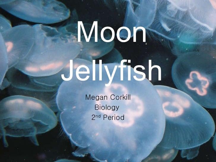 Moon jellyfish slide show- Megan Corkill