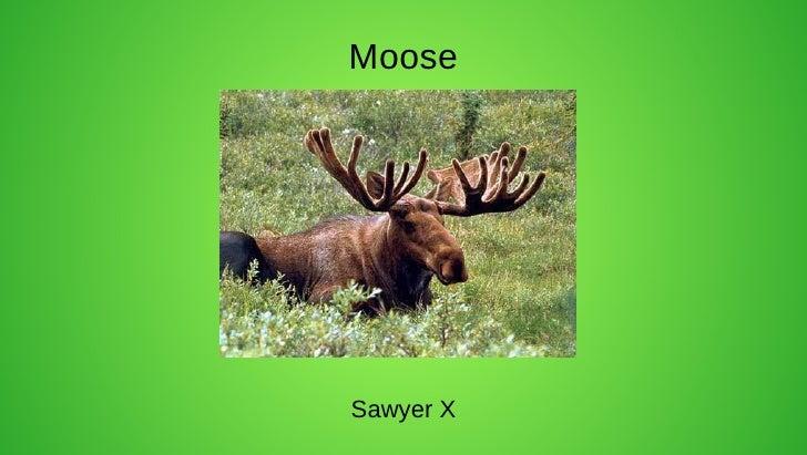MooseSawyer X