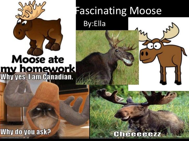 Fascinating Moose By:Ella