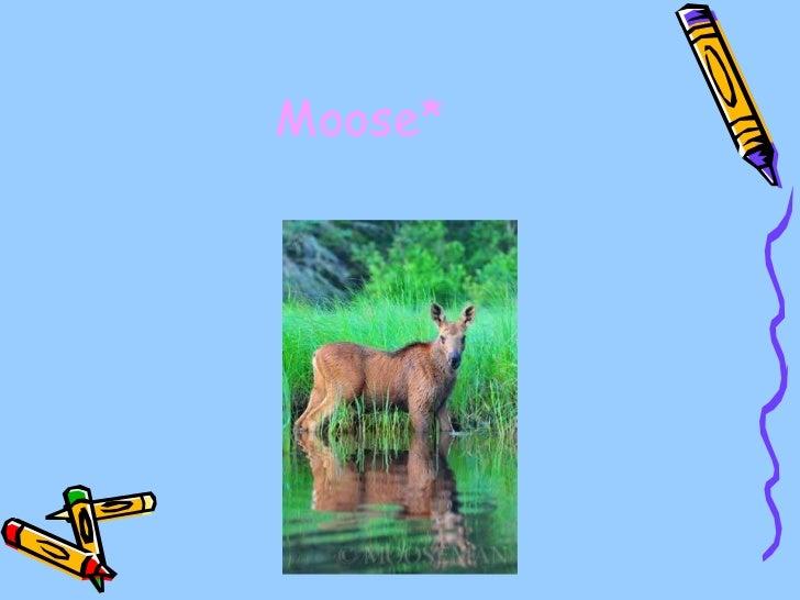 Moose*