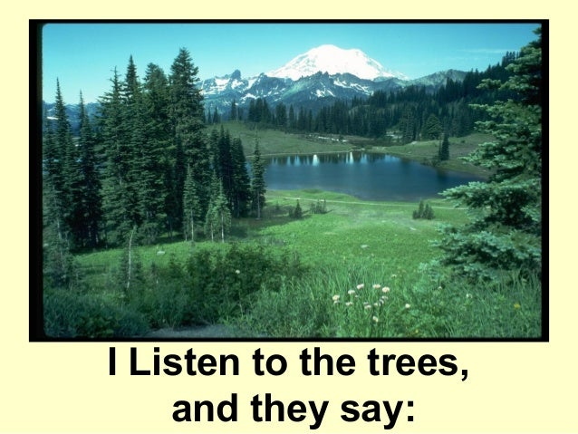 I Listen to the trees,    and they say: