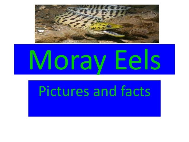 Moray EelsPictures and facts