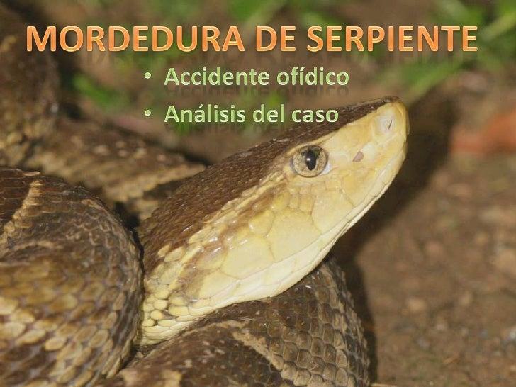 MORDEDURA DE SERPIENTE<br /><ul><li>  Accidente ofídico