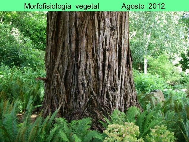 Morfofisiologia vegetal Agosto 2012