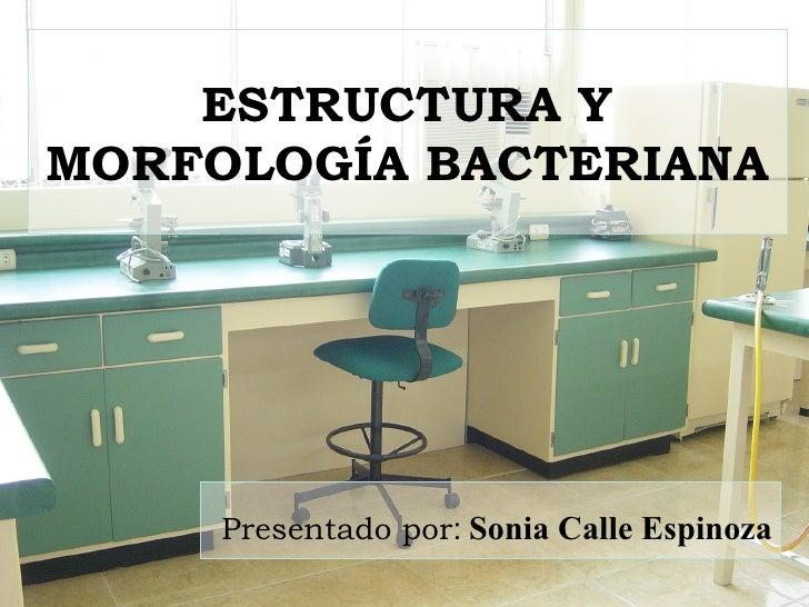 ESTRUCTURA Y MORFOLOGÍA BACTERIANA Presentado por :   Sonia Calle Espinoza