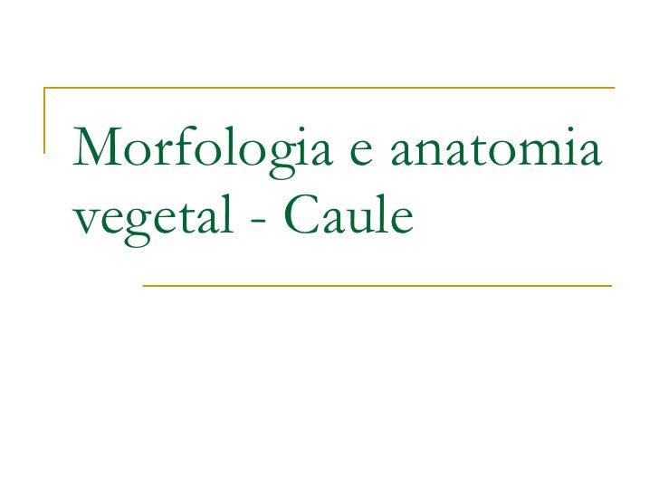 Morfologia e anatomia vegetal - Caule