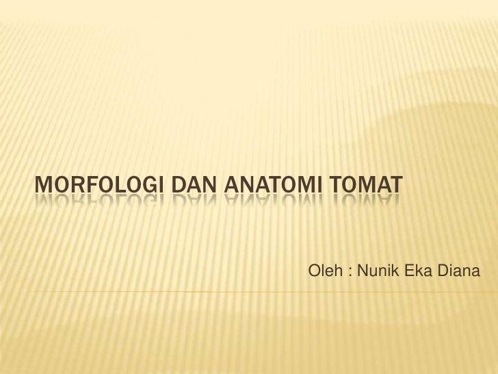 MORFOLOGI DAN ANATOMI TOMAT                    Oleh : Nunik Eka Diana