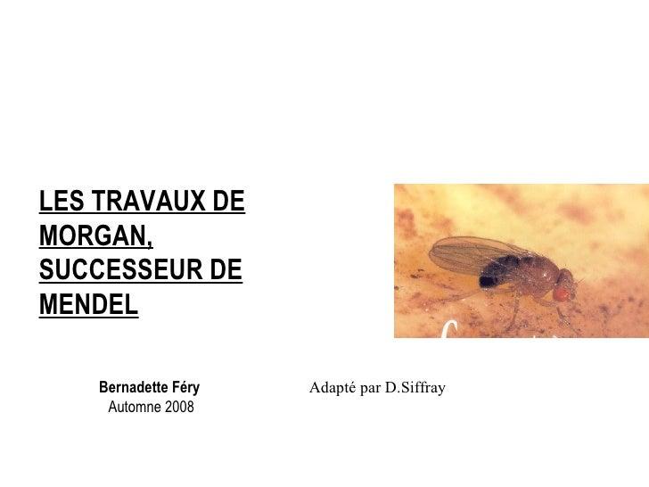 Bernadette Féry   Automne 2008 LES TRAVAUX DE MORGAN, SUCCESSEUR DE MENDEL Adapté par D.Siffray