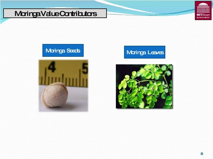 acceptability of fortified malunggay leaves as Malunggay capsules and malunggay instant tea posted by mlgs at 2:55 am malunggay leaves are good for headache, bleeding from a shallow cut malunggay fortified pork chicharon and cornsnax.