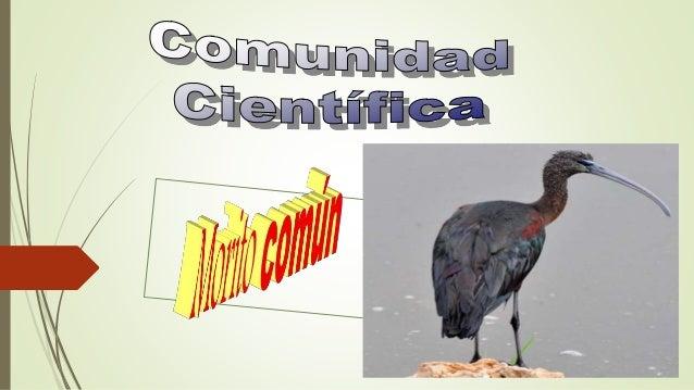 Nuestra investigación sobre el morito común comenzó con la visita al centro de investigación científica y ambiental de la ...