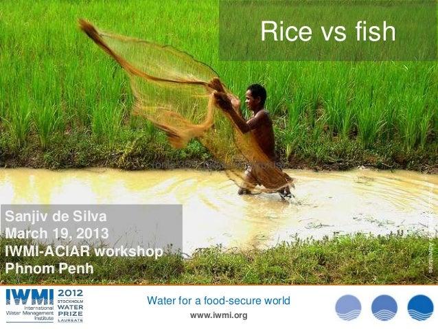 Rice vs. fish