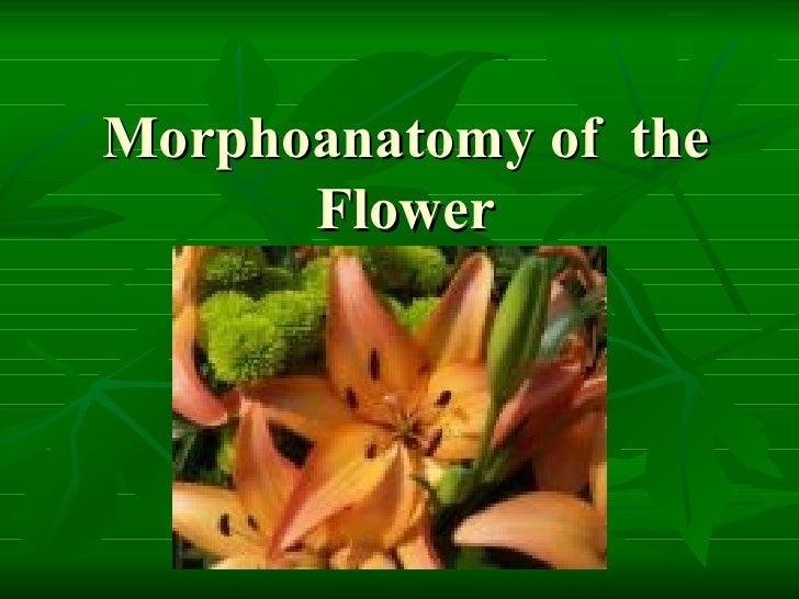 Morphoanatomy of  the Flower