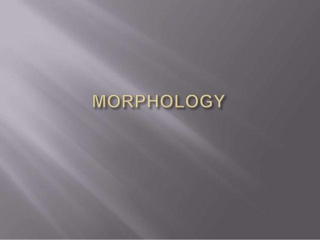Morphology por Diego Duma