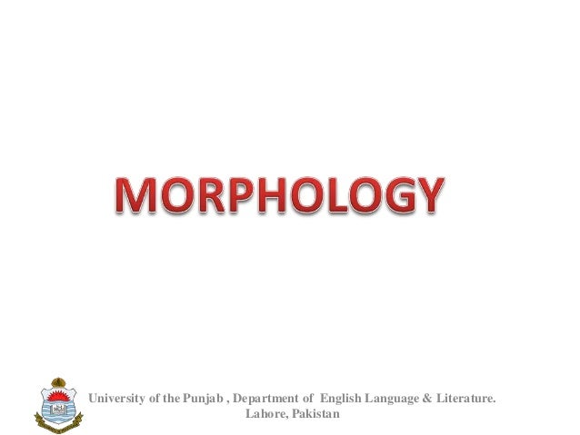 A Brief Introduction of Morphology