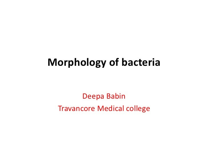 Morphology of bacteria         Deepa Babin  Travancore Medical college