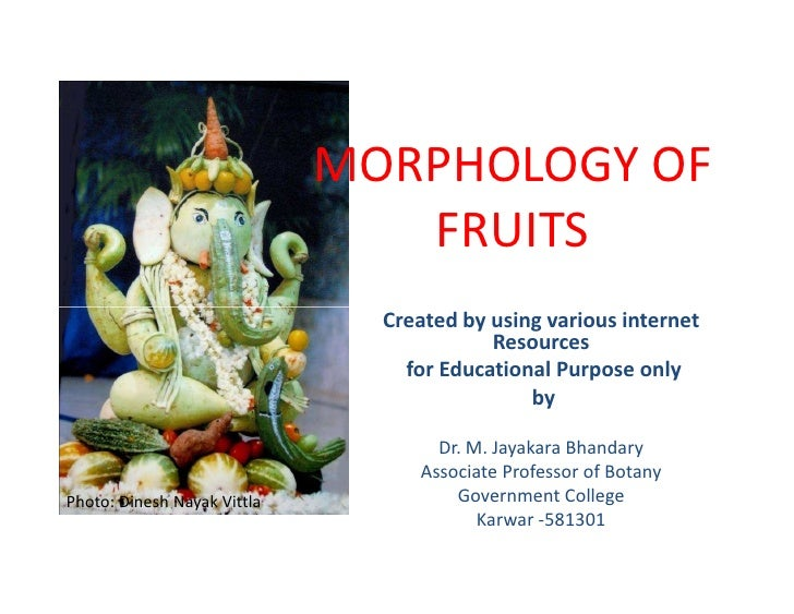 MORPHOLOGY OF                                FRUITS                               Created by using various internet       ...