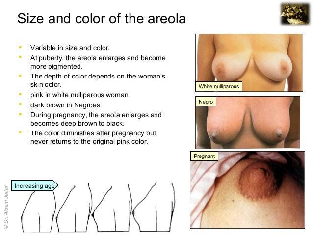glands of montgomery porn