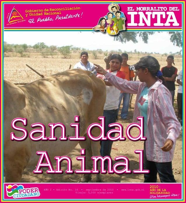 SanidadAnimalSanidadAnimalAÑO 2 • Edición No. 16 • septiembre de 2010 • www.inta.gob.niTiraje: 5,000 ejemplares