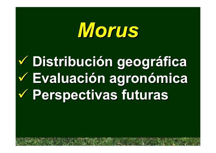 Morus Distribución geográfica Evaluación agronómica Perspectivas futuras