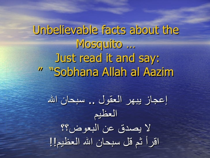 """Unbelievable facts about the Mosquito … Just read it and say:   """"Sobhana Allah al Aazim """" إعجاز يبهر العقول  ..  سبحان الل..."""