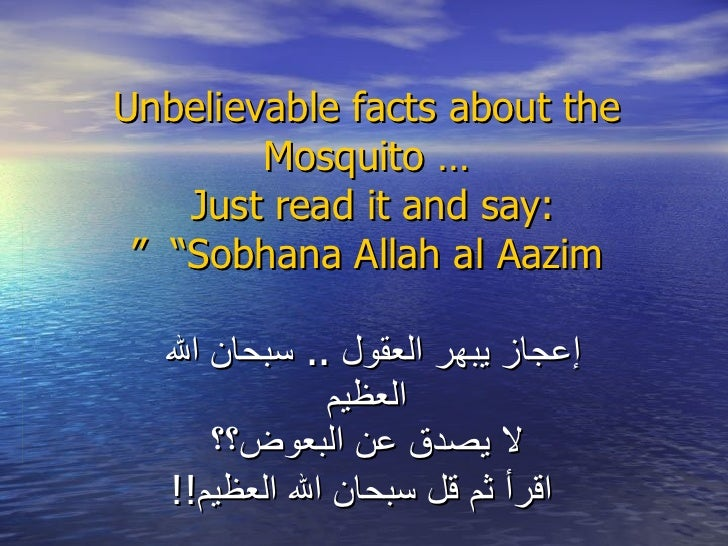 "Unbelievable facts about the Mosquito … Just read it and say:   ""Sobhana Allah al Aazim "" إعجاز يبهر العقول  ..  سبحان الل..."
