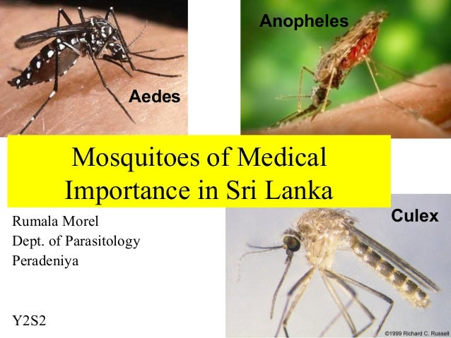 Rumala MorelDept. of ParasitologyPeradeniyaY2S2Mosquitoes of MedicalImportance in Sri LankaAedesAnophelesCulex
