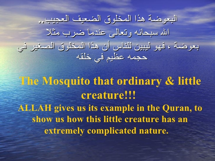 Image result for mosquito in Quran
