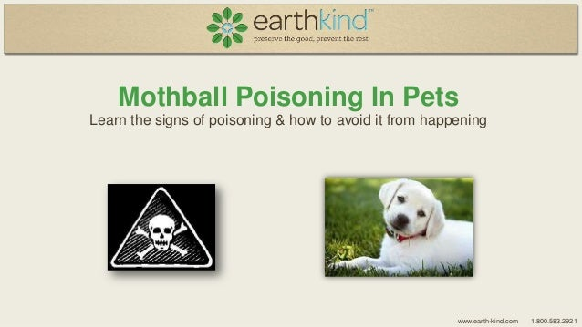 Mothball Poisoning In Pets Learn the signs of poisoning & how to avoid it from happening  www.earth-kind.com  1.800.583.29...