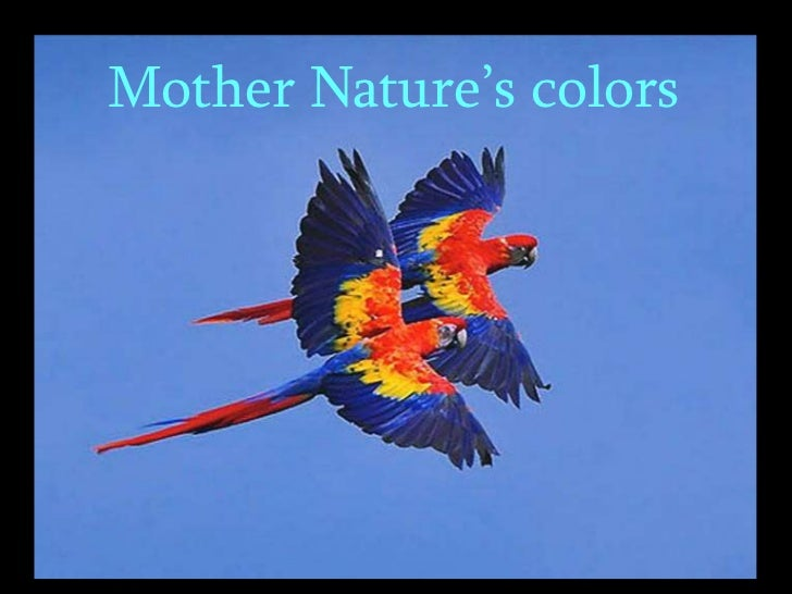 Mother Nature's Colors
