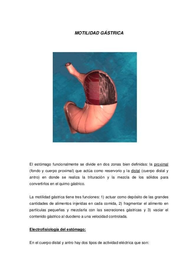 MOTILIDAD GÁSTRICA El estómago funcionalmente se divide en dos zonas bien definidas: la proximal (fondo y cuerpo proximal)...