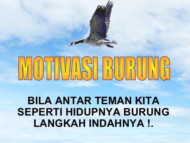 Motivasi burung