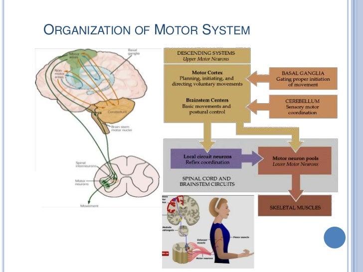 Organization of Motor System<br />