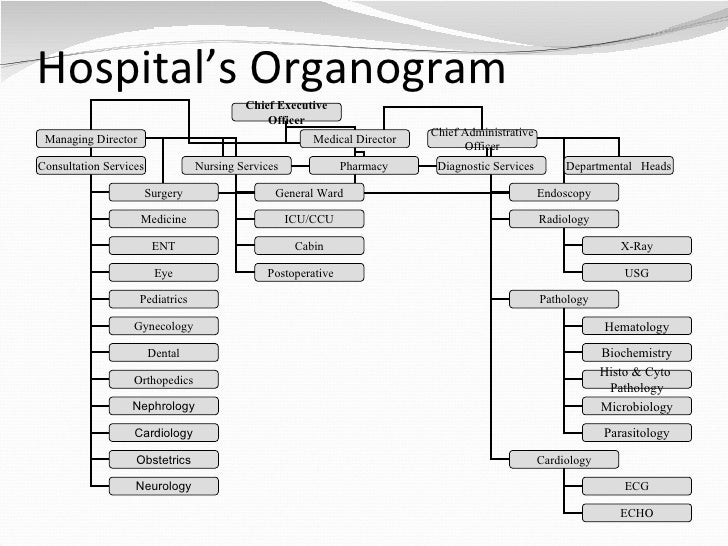 hospital organogram The hierarchical smartart diagrams are ideal for creating organization charts in  powerpoint 2016 organization charts — you know, those box-and-line charts.