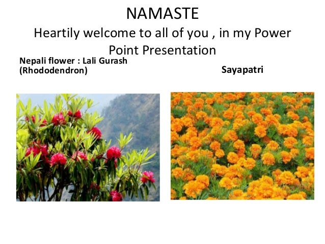 NAMASTEHeartily welcome to all of you , in my PowerPoint PresentationNepali flower : Lali Gurash(Rhododendron) Sayapatri