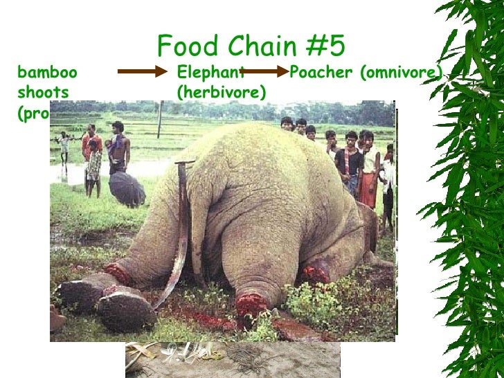 Asian mountain chain